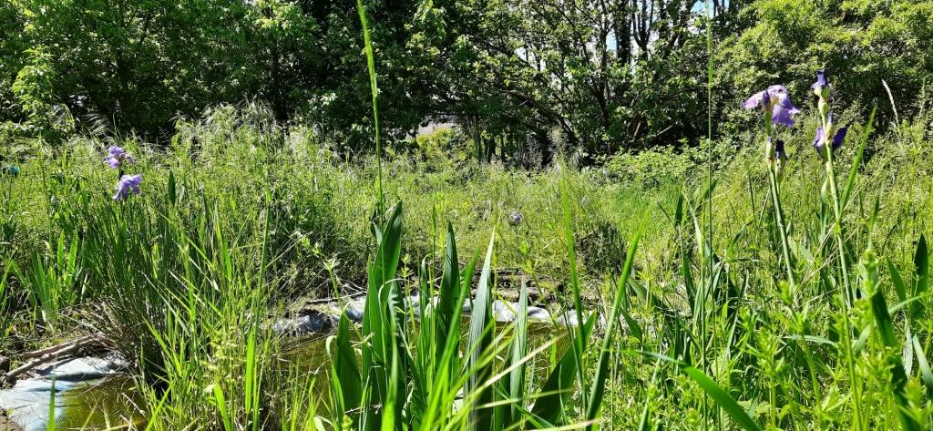 Il piccolo stagno del Rospo smeraldino, Giardini San Faustino -  Orti Cascina Biblioteca